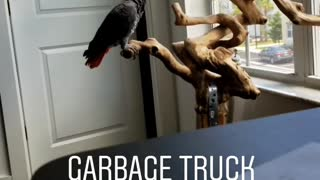 Parrot imitates sound of garbage truck backing up into car