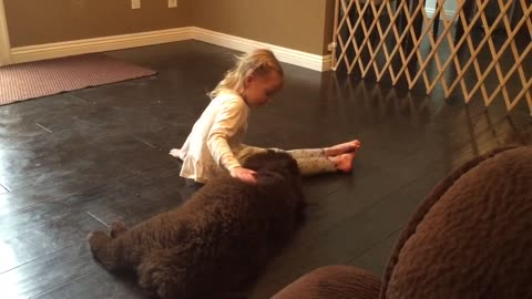 Little girl trains her gigantic Newfoundland puppy