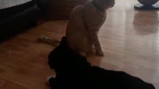 Binky and Alfie wrestling