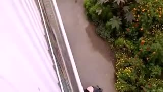 Woman Jumping from window - Video