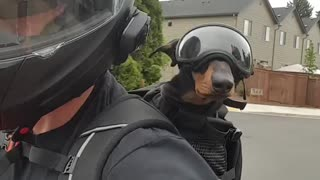 Pup gets geared up to go for motorcycle ride with his owner