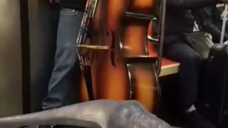 Guy playing cello giant violin subway trex snapchat filter - Video