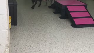 New Friends Have the Zoomies