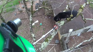 Rescuing Cat Stuck in Tree
