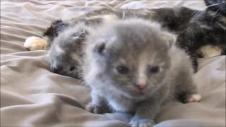 Adorable Little Kittens First Time Looking Into A Camera