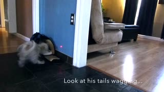 Puppy chases laser while cat watches