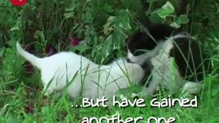 Cat Adopts Puppies - Video