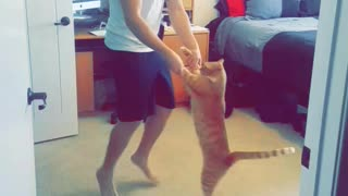 Man in room dancing with orange cat - Video