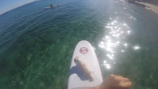 Paddle Boarding In The Ocean With A Dog  - Video