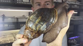 One Big Snail - Video