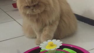 Cat Too Clever for Butterfly Toy