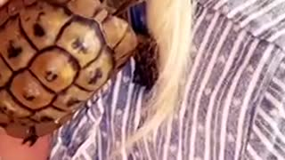pet Tortoise climbs onto girls shoulder while she giggles!
