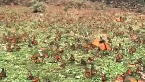 The most beautiful scene of a group of butterflies in the garden