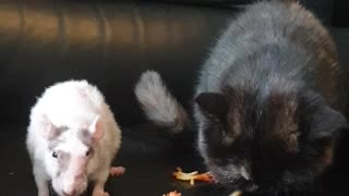 Cat and Rat Share Their Favorite Food