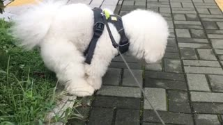Dogy poping on the street