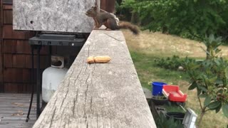 Squirrel Sneaks Off with Peanut