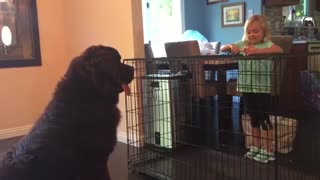 She Plays Pretend With Her Toys. But When The Dog Notices? CLASSIC!