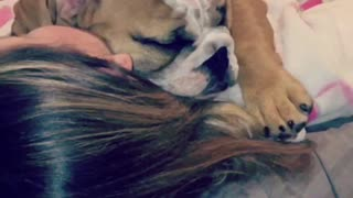 Baby Bulldog sleeping - Video