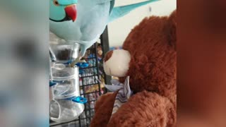 Parrot gives kisses to new teddy bear