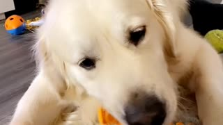 Dog Loves Eating Carrots