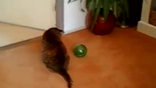 Cat versus green rolling hamster - Video