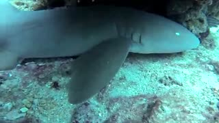 Shark Attacks GoPro Camera - Video