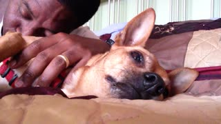 A Dog Growls Along With His Humming Human - Video