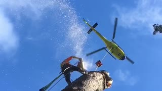 Tree Removal by Helicopter - Video
