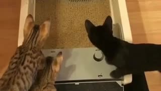cats looking at Sand cleaning machine