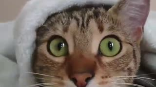 Funny Cat - When the cat watching horror movies - A cat hiding under the blanket - Video