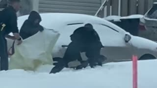 Canadian Police Try to Catch Seal