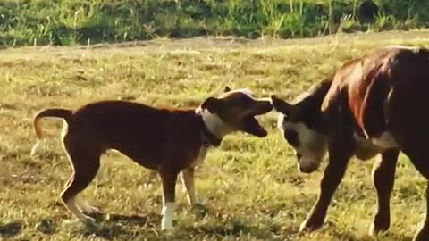 Calf share special friendship with gentle doggy