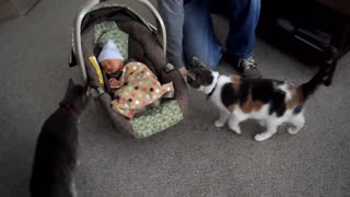 Cats Meeting Cutie Babies for the FIRST Time