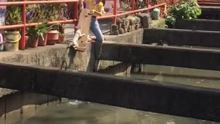 Woman Rescues Cat from Water - Video