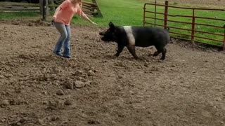 Woman Falls Off Pig When It Runs Away