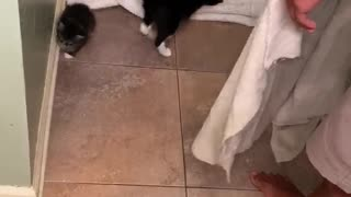 Cat Earns its Keep