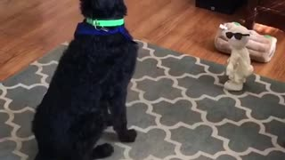 Music black dog green and blue collar is interested in pitbull fireball singer dancing toy - Video