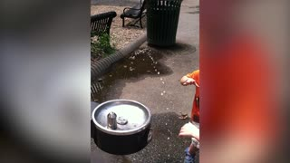 Adorable Tot Fails At Using Water Fountain - Video