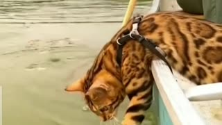 Fanny Cat 🙀 tries to help