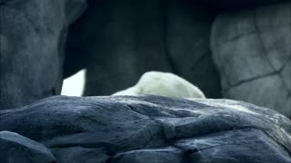 White Bear Wake Up In Cave
