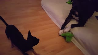 Two dogs hold epic standoff for their favorite toy