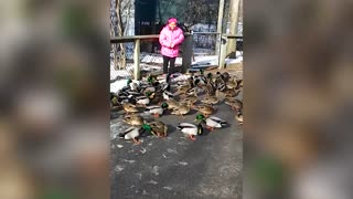 Ducks Swarm Stressed Out Little Girl With Sandwich - Video