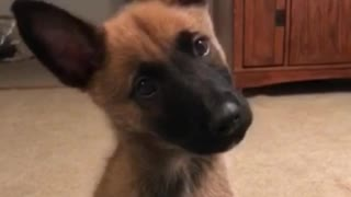 Cutest head tilt ever  - Video