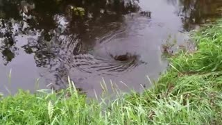Whirl Pool Taking Water Under Road - Video