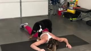 "Puppy ""helps out"" owner with her workout"