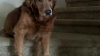Dog Closes Front Door In Rejection Of Taking A Walk