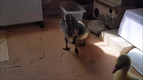 Emu Flash