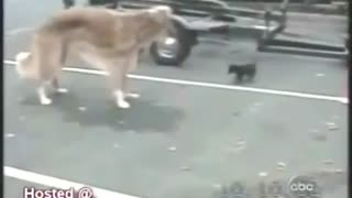 Cats and dogs #Funny2 - Video