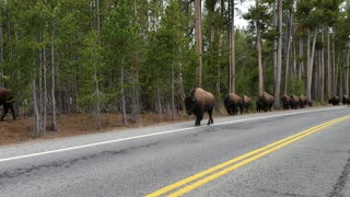 Buffalo Crossing - Video
