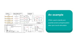 iTRAQ-based Proteomics Approaches